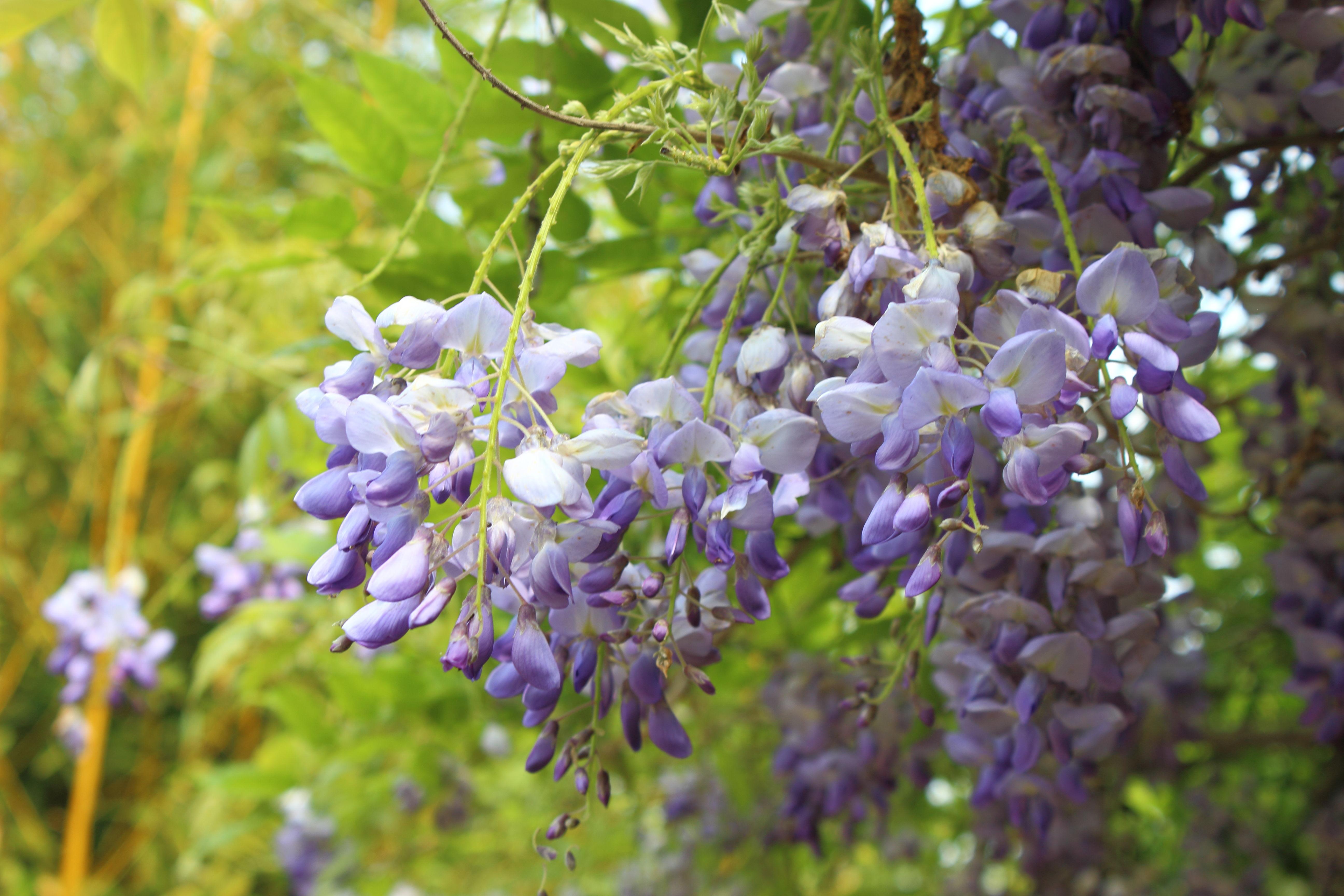 Vier Jahreszeiten Park Oelde Museninsel