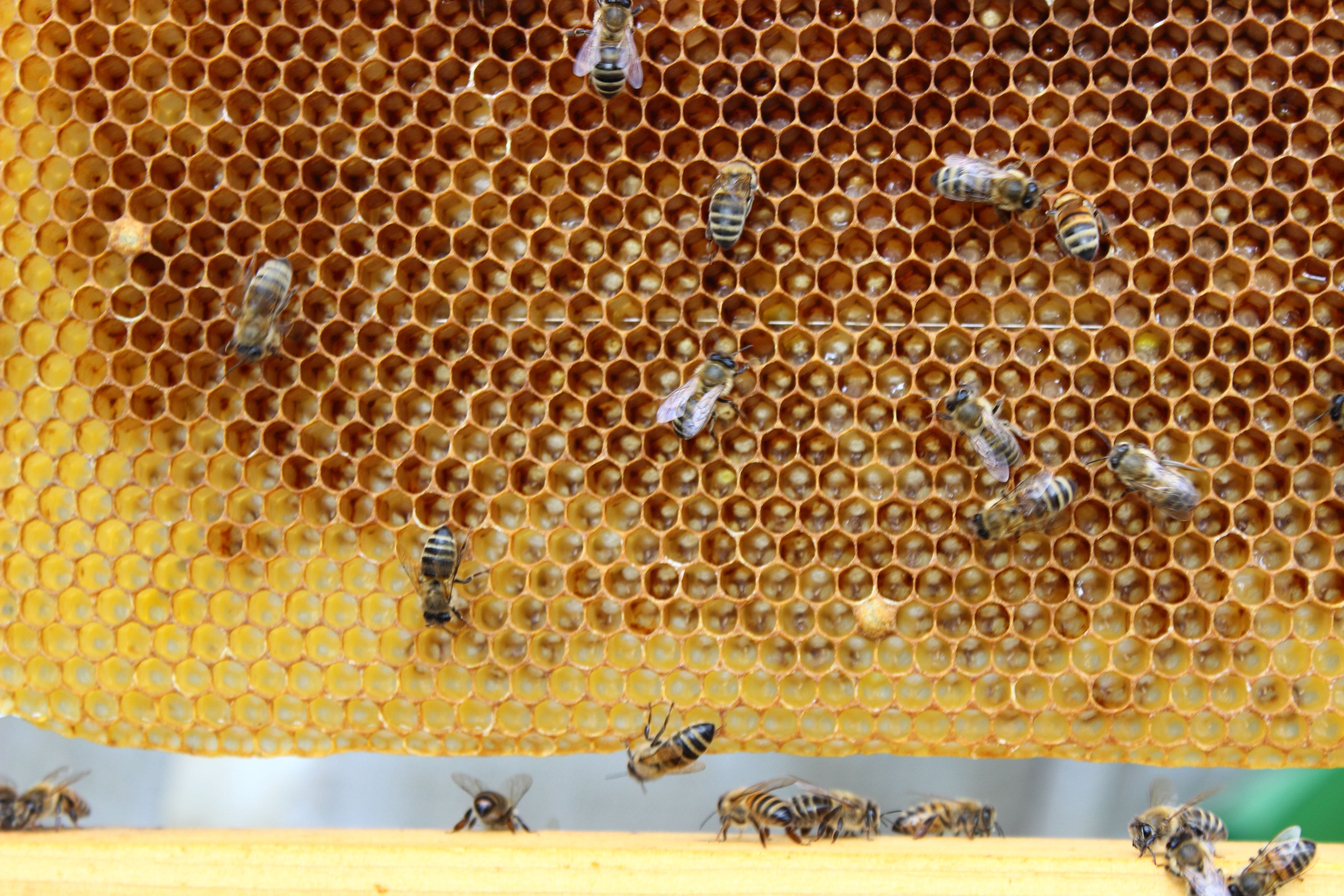 Imkerei Domke Bienen