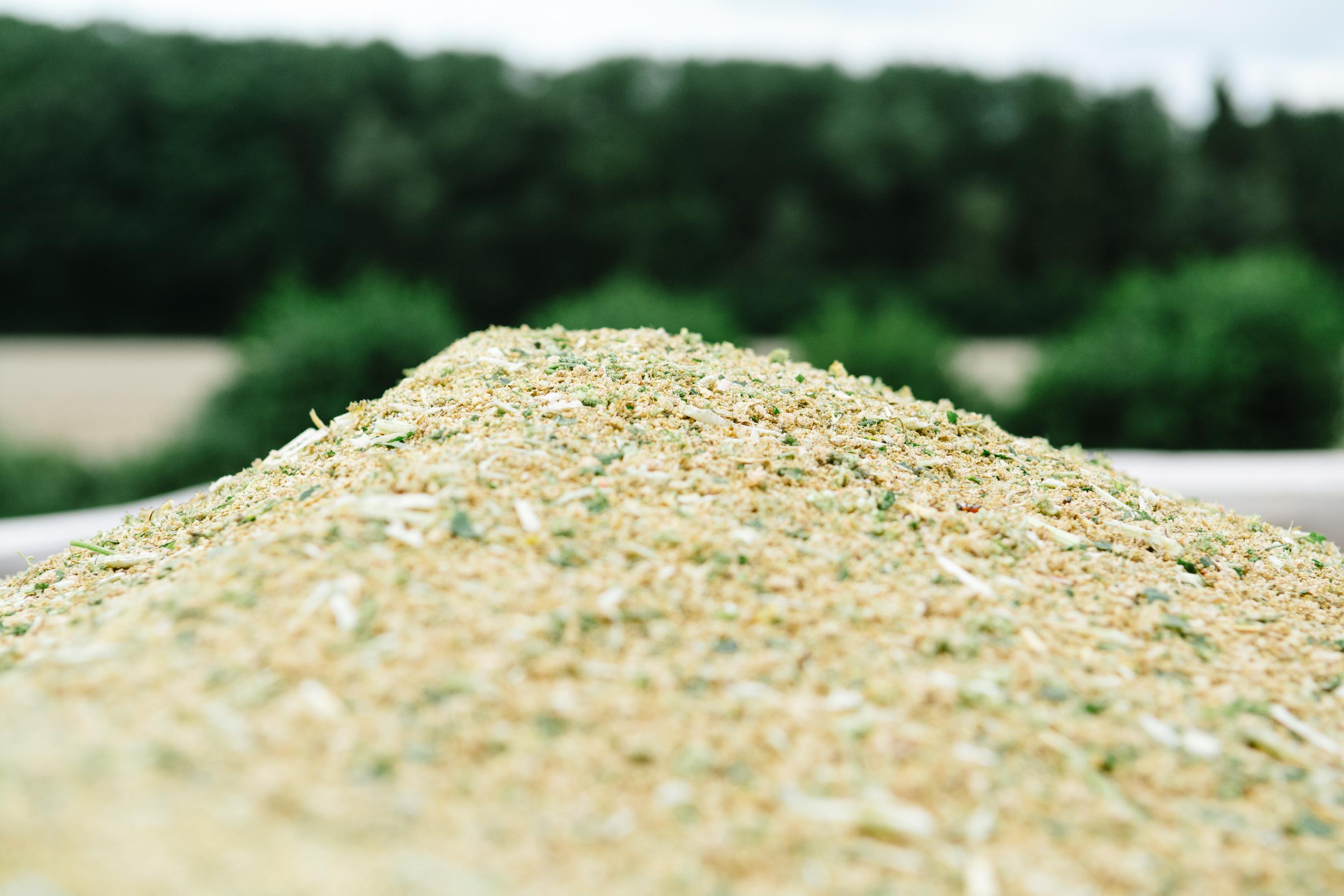 Hof Drerup Münsterland Quinoa_Ernte-34