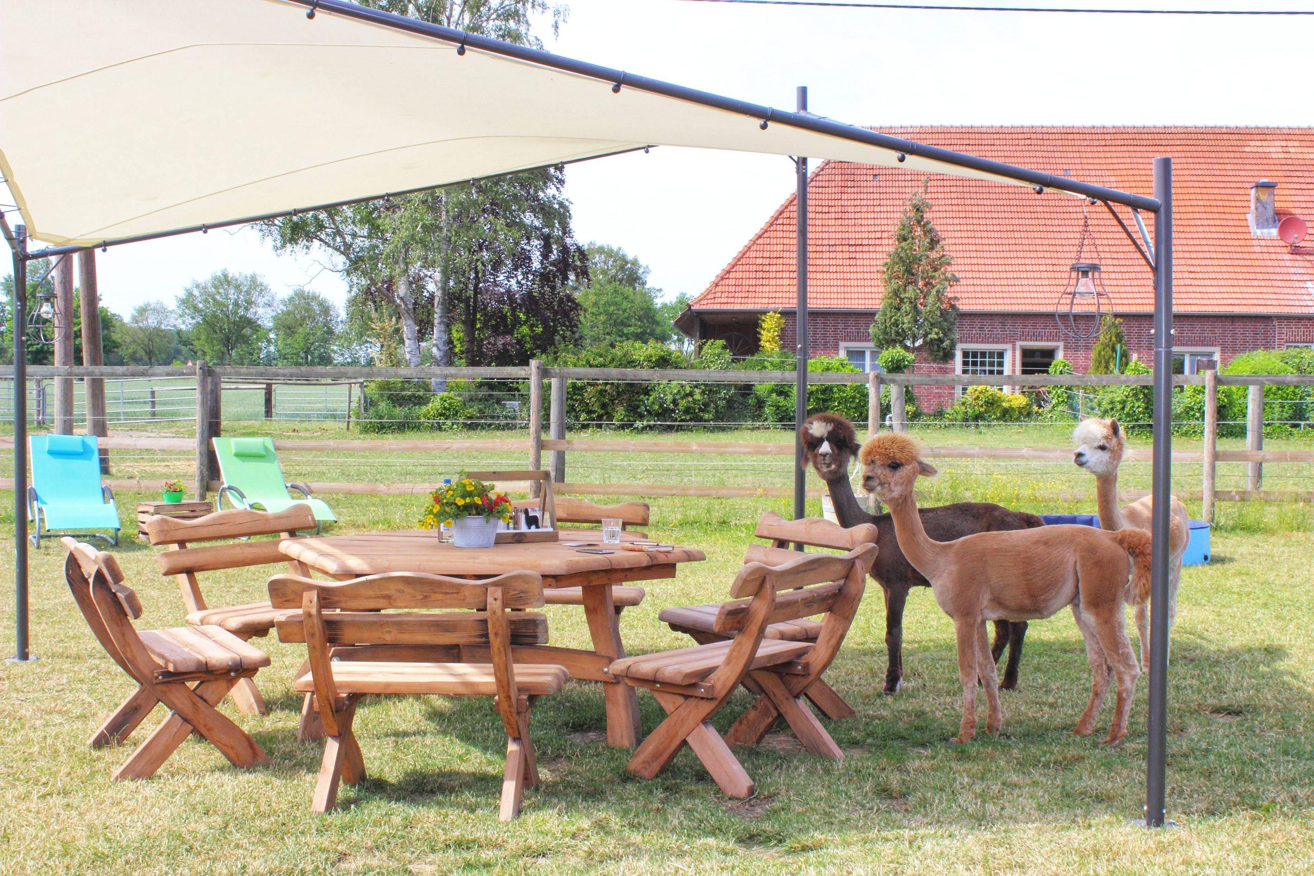 Herzensgutteam Alpaka Picknick-01