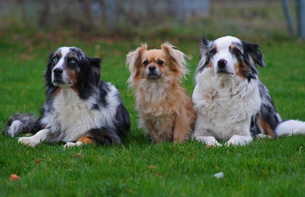 Herzensgutteam Begleittherapiehunde